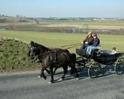 Kapervogn i Klampenborg | Hestevognskørsel nær Charlottenlund
