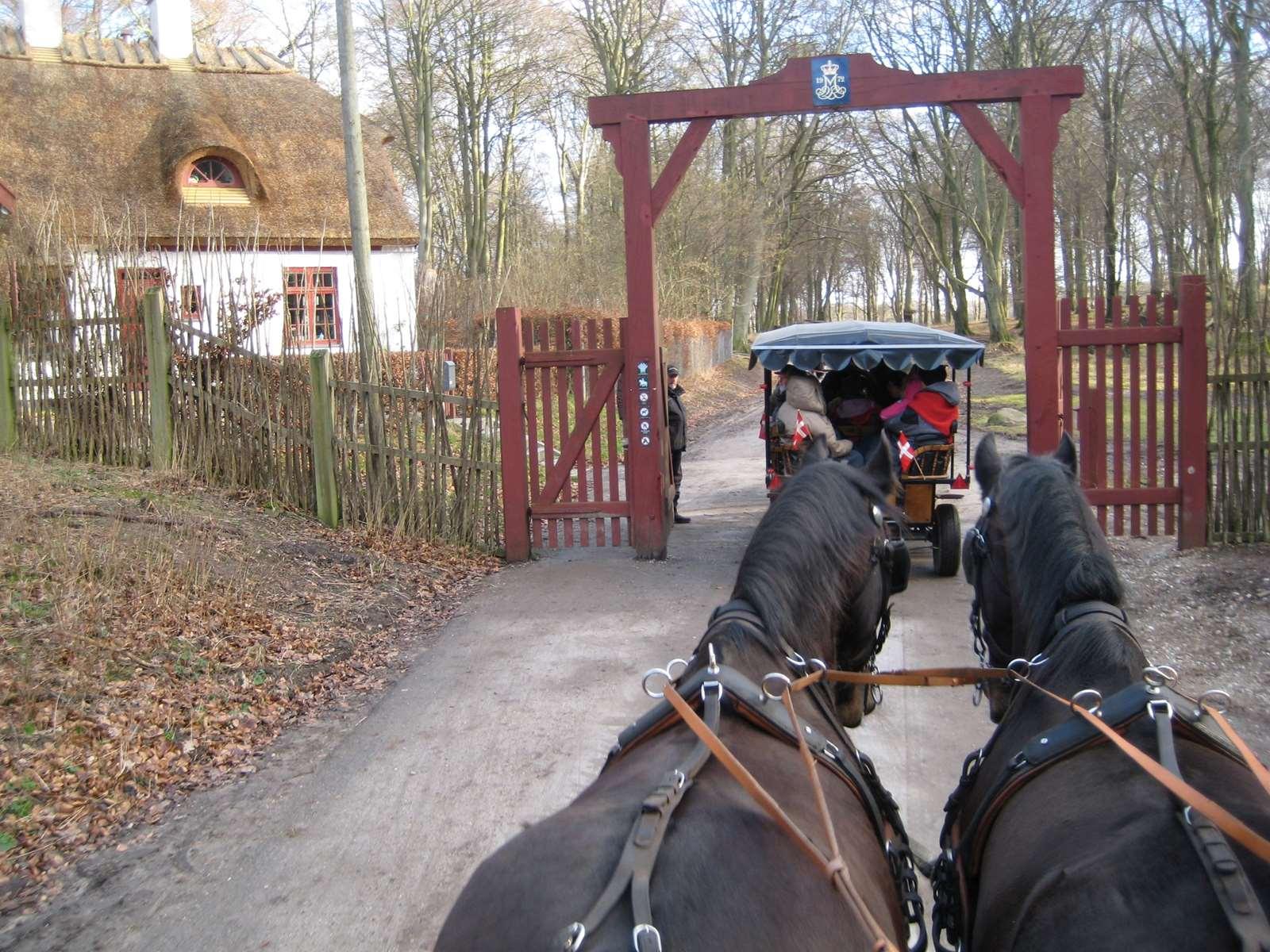 Hestevognskørsel i Klampenborg | Hestevogn nær Charlottenlund